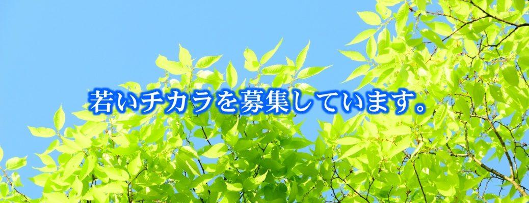 株式会社 近藤銘木店